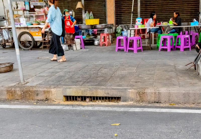 Dirty rats coming out from the sewage hold on the street of Bangkok, Thailand January 5, 2019. The Dirty rats coming out from the sewage hold on the street of stock photography