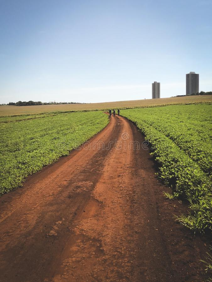 Dirty road. A dirty road crossing a green plantation. Copy space available stock photography