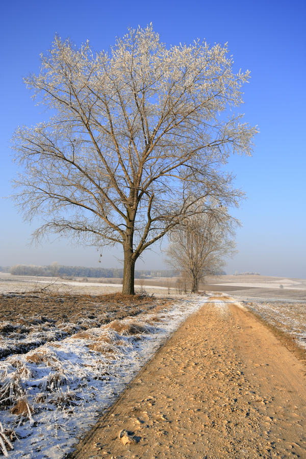 Download Dirty rural road stock image. Image of brown, poland - 25405263