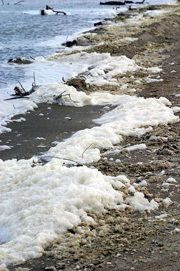 Download Dirty Shoreline stock photo. Image of beach, debris, shoreline - 37828