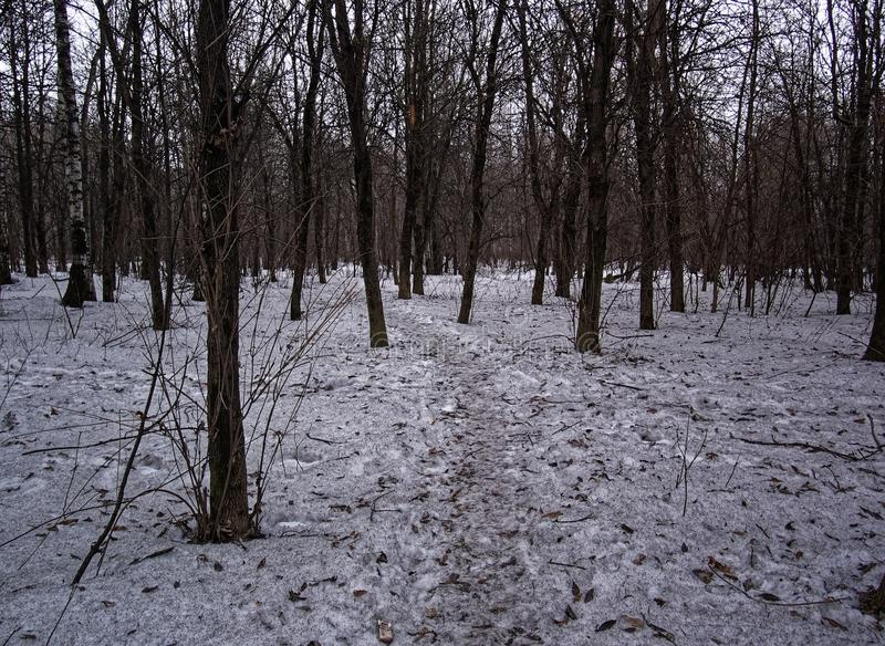 Dirty snow in the Park in early spring royalty free stock image