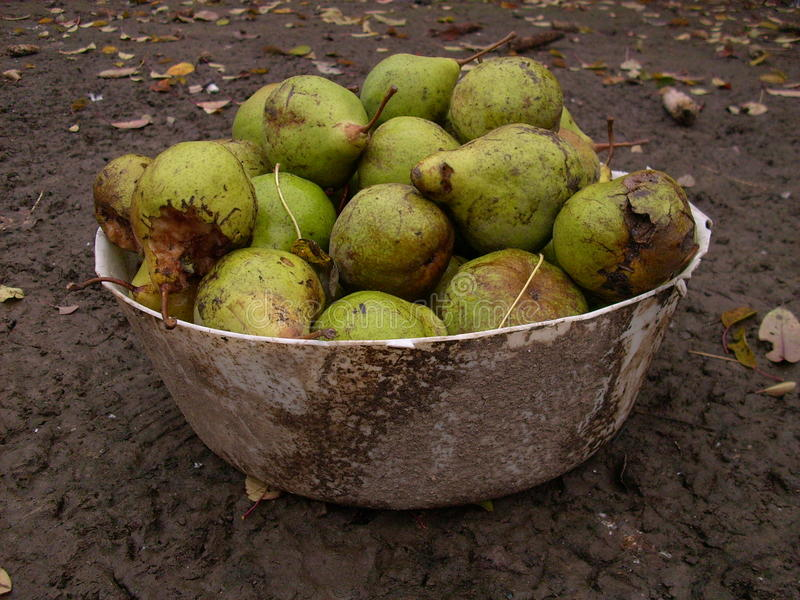 Download Dirty still stock image. Image of green, pears, autumn - 24108377