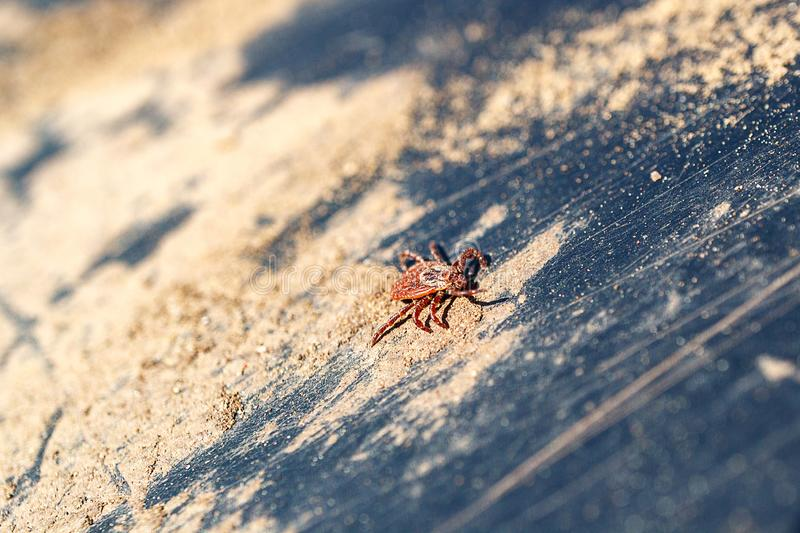 On a dirty surface creeping red mite royalty free stock image