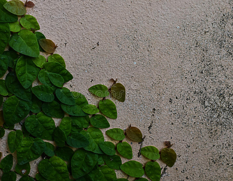 The dirty wall covered with green velcro. stock image