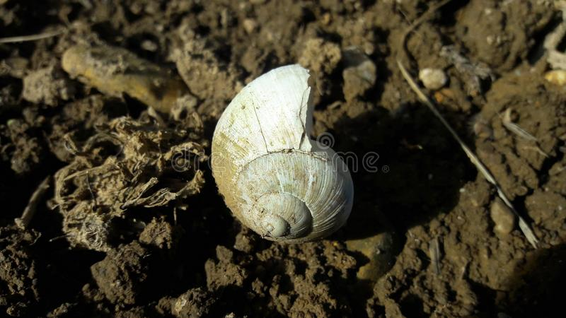Dirty white snail`s house on empty land with crushed entrance. Dirty white snail`s house on empty, brown land with crushed entrance surrounded with dried tweedes stock image