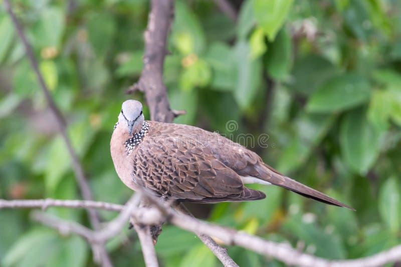 Птица (голубь, голубь или Disambiguation) в природе стоковые изображения rf