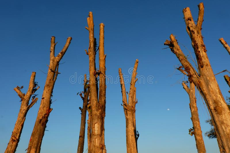 Disboscamento, alberi di Cutted dalla foresta in Sud-est asiatico fotografia stock