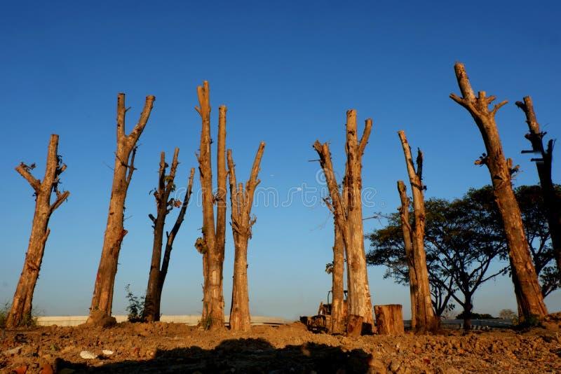 Disboscamento, alberi di Cutted dalla foresta in Sud-est asiatico fotografia stock libera da diritti