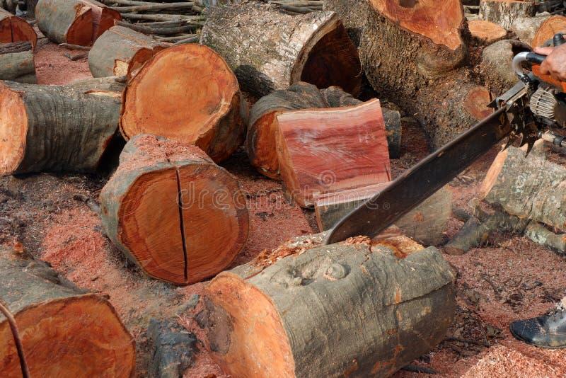 Disboscamento, alberi di Cutted dalla foresta in Sud-est asiatico immagini stock
