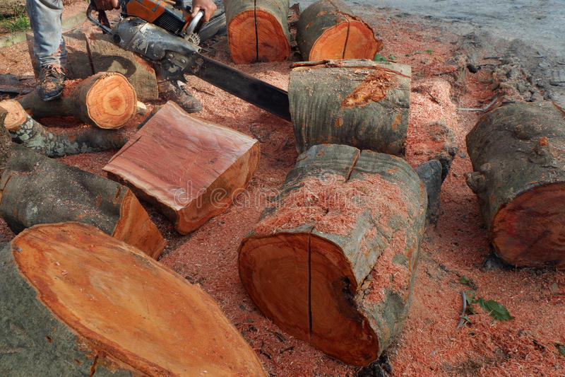 Disboscamento, alberi di Cutted dalla foresta in Sud-est asiatico fotografie stock