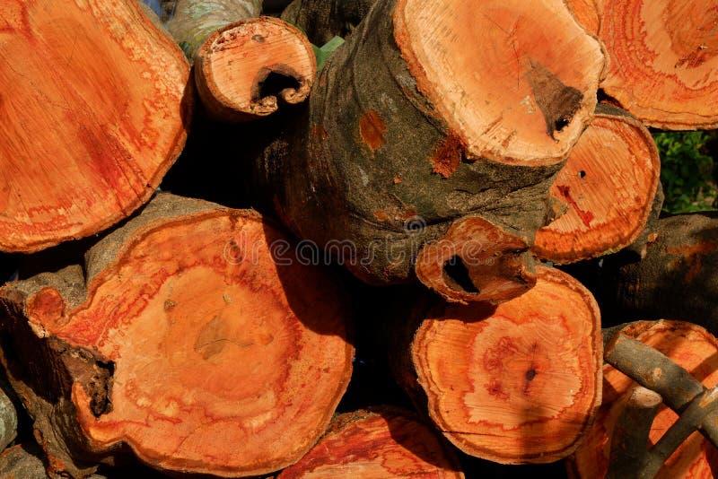Disboscamento, alberi di Cutted dalla foresta in Sud-est asiatico immagine stock libera da diritti