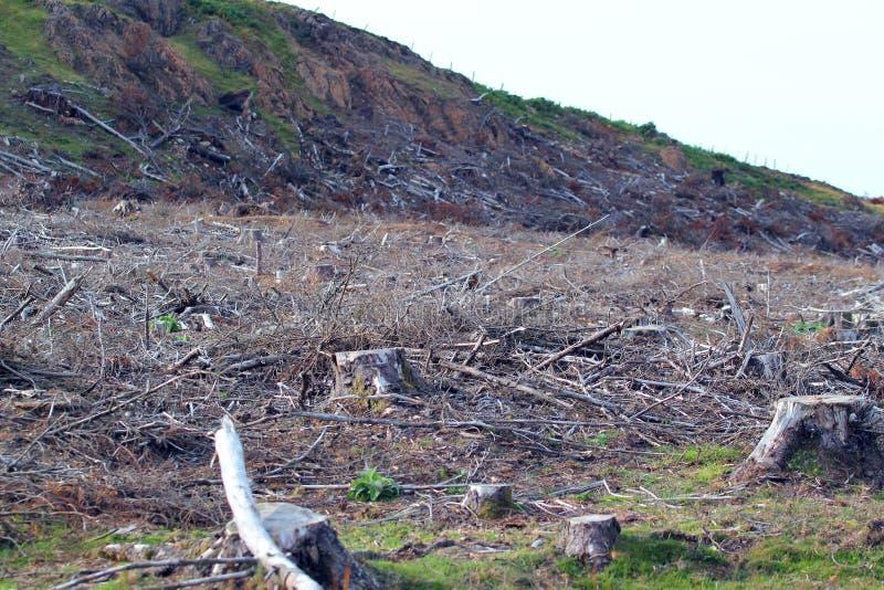 disboscamento Riscaldamento globale fotografia stock libera da diritti