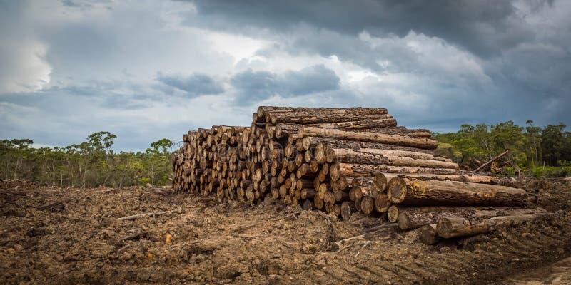 Disboscamento tropicale della foresta pluviale immagini stock libere da diritti