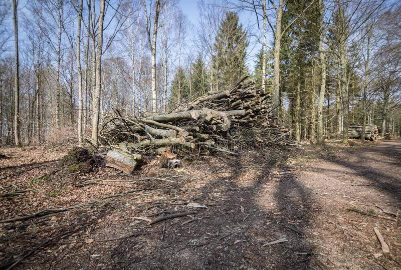 Disboscamento, uccisione della foresta fotografie stock libere da diritti