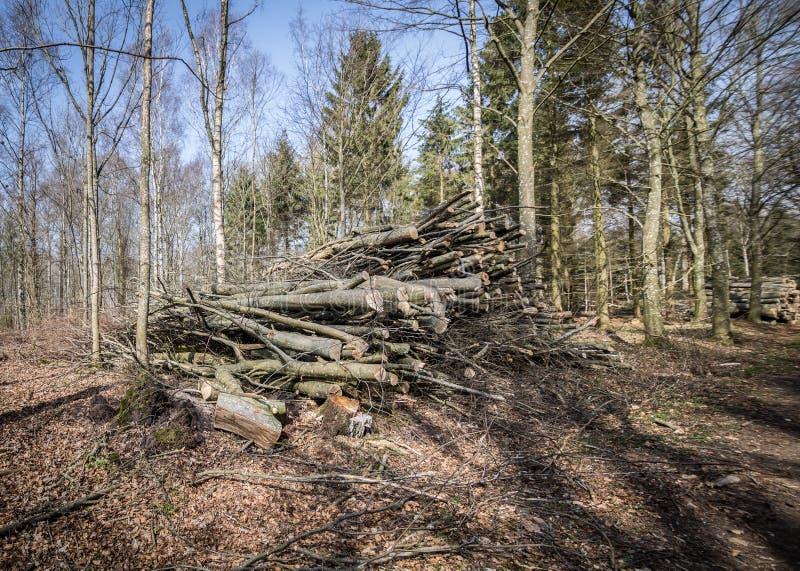 Disboscamento, uccisione della foresta fotografie stock