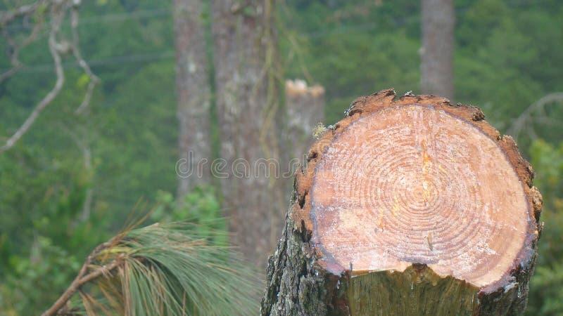 Disboscamento in una foresta centro americana fotografia stock libera da diritti