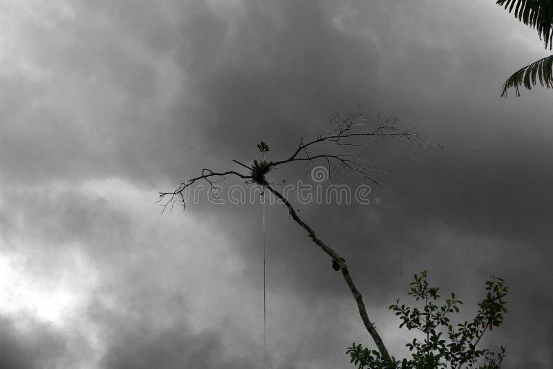 Disboscamento: una pianta sola che sopravvive su un ramo morto con le nuvole scure nei precedenti in BW immagini stock libere da diritti