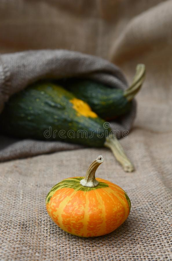 Disc-shaped ornamental gourd and large green gourds on hessian. Disc-shaped ornamental gourd in selective focus in front of large green gourds in a hessian sack stock photography