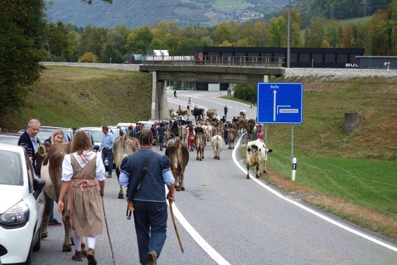 Discesa svizzera del bestiame di Alpabfahrt 2018 fotografia stock libera da diritti