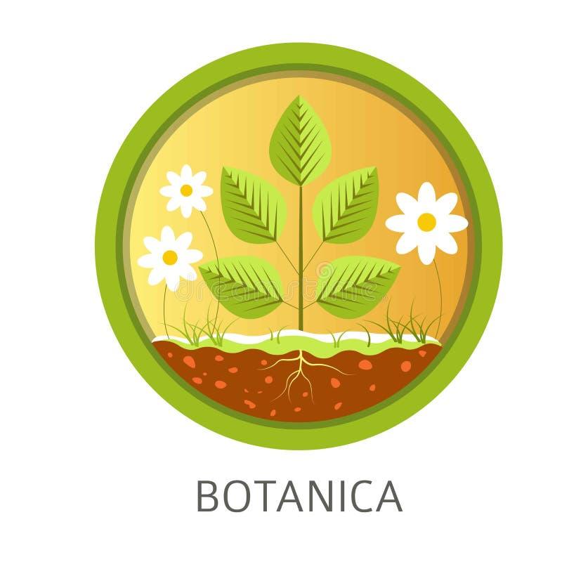 Disciplina della scuola di Botanica, lezioni informative circa la natura e flora illustrazione di stock