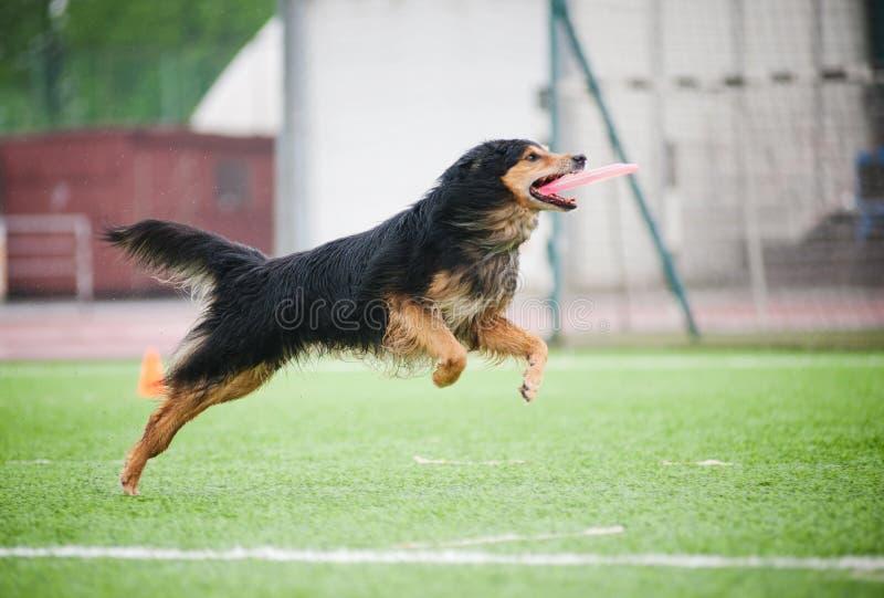 Disco de cogida del perro del Chod imagen de archivo libre de regalías