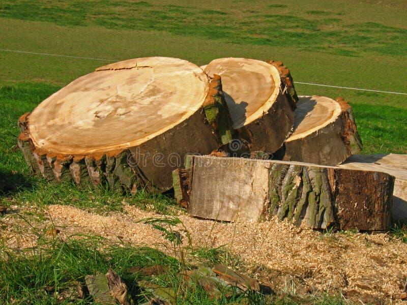 Disco de un árbol del sawing fotos de archivo