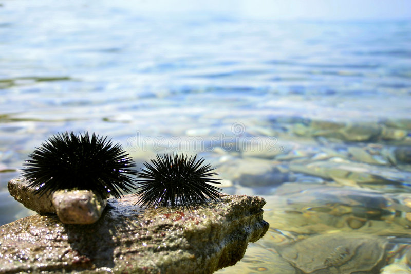 Download Discoli del Mar Nero immagine stock. Immagine di urchin - 209157