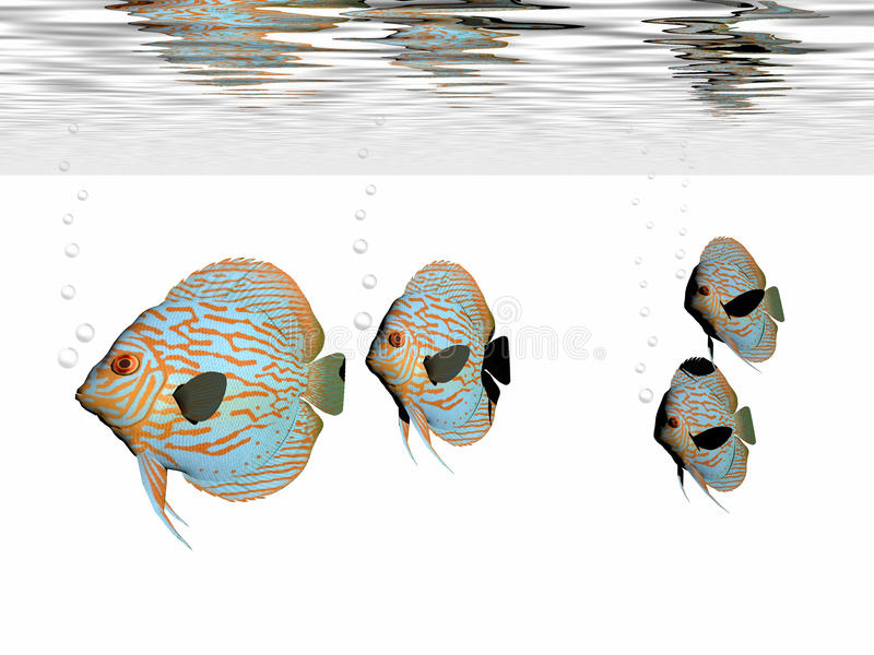 Discus Fish stock illustration