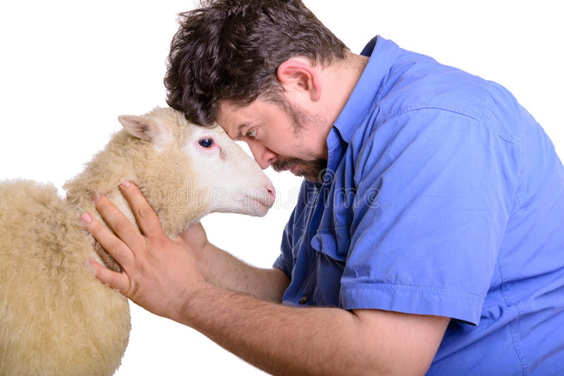 Discussione animale dell'uomo e delle pecore immagini stock libere da diritti