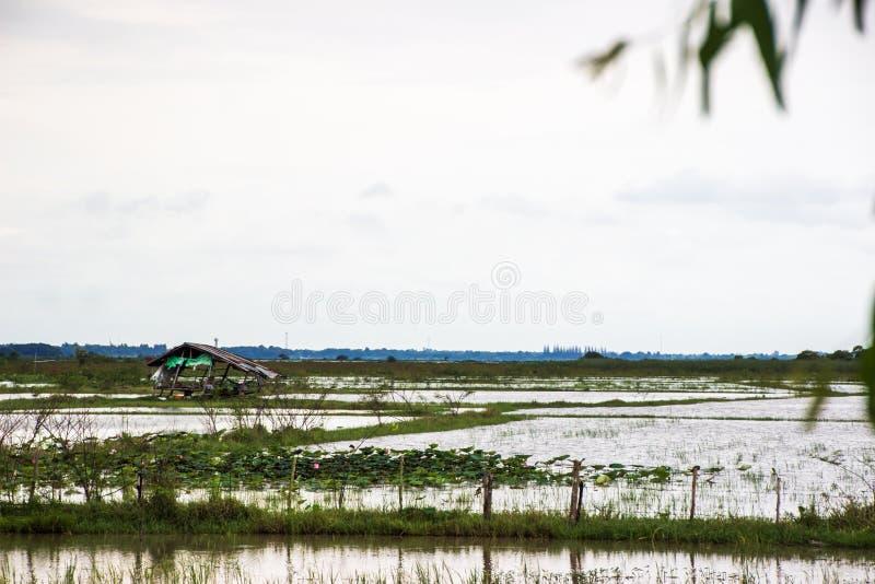 Discuta in mezzo all'acqua, campi sommersi fotografia stock libera da diritti