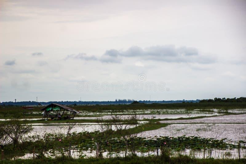 Discuta in mezzo all'acqua, campi sommersi immagini stock libere da diritti
