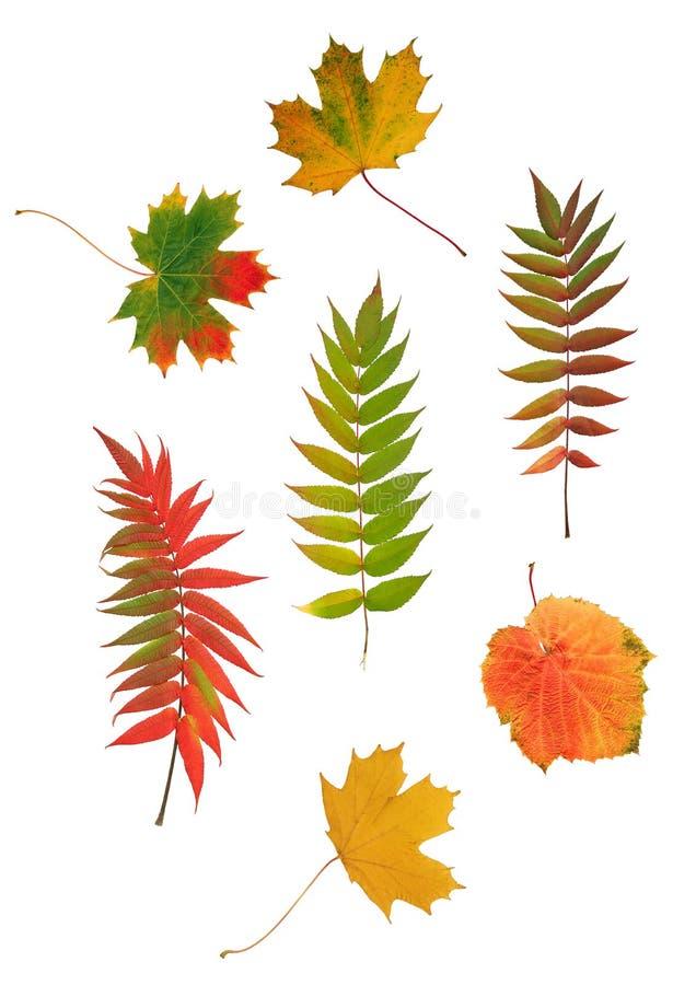 Diseño abstracto de la hoja del otoño imagenes de archivo