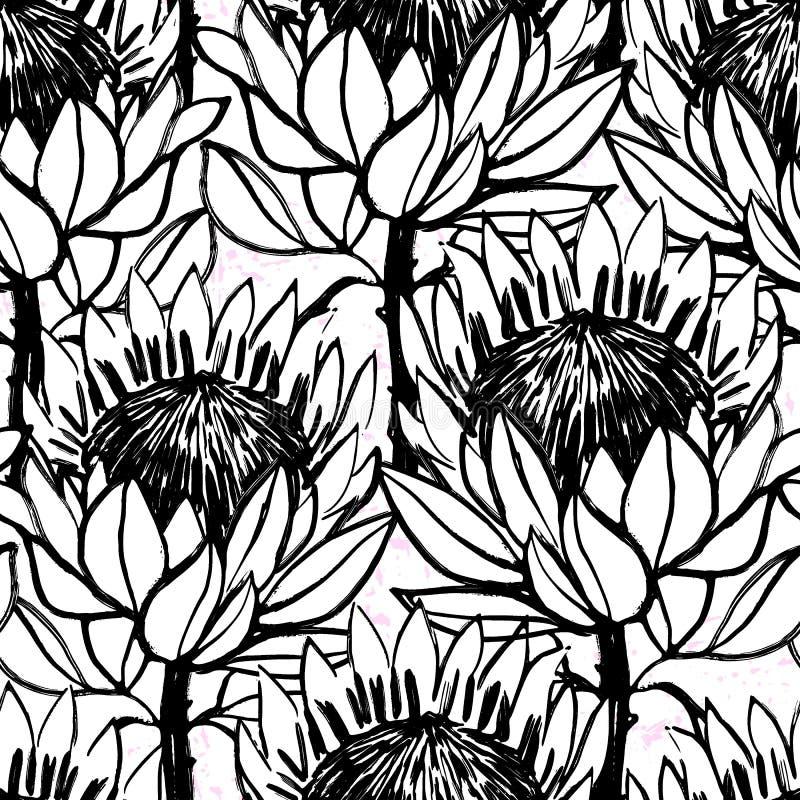 Diseño blanco y negro del protea de la mano de la tinta del modelo inconsútil exhausto de las flores libre illustration