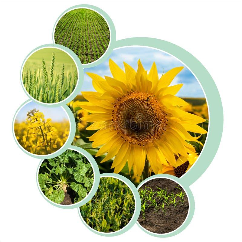 Diseño de círculos individuales para el tema agrario con foto fotos de archivo libres de regalías