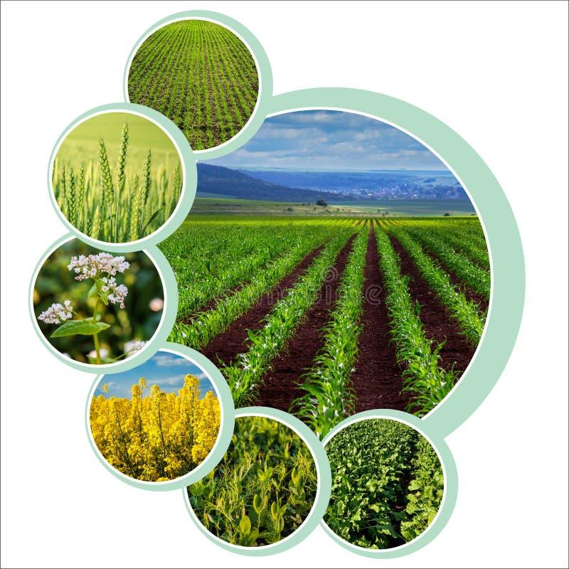 Diseño de círculos individuales para el tema agrario con foto foto de archivo libre de regalías