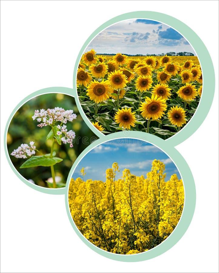 diseño de círculos de diseño para el tema agrario con foto foto de archivo
