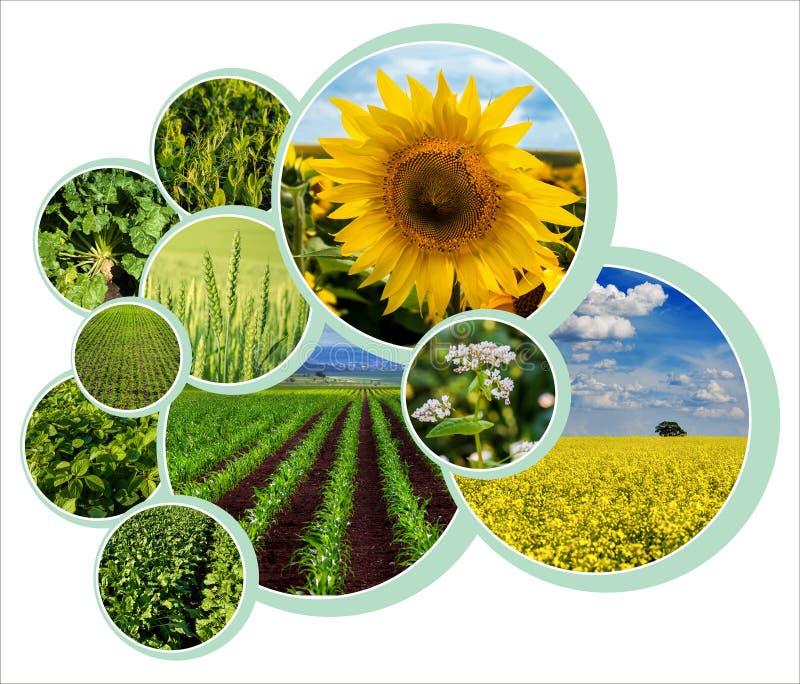 diseño de círculos de diseño para el tema agrario con foto foto de archivo libre de regalías