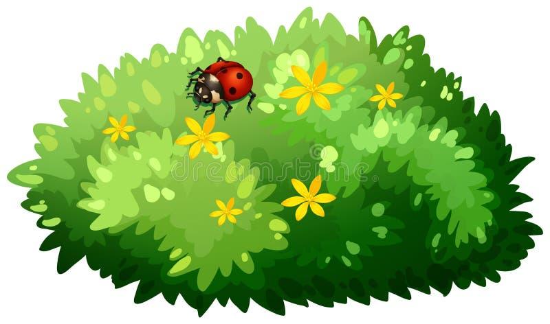 Diseño de la naturaleza con el arbusto y el insecto ilustración del vector