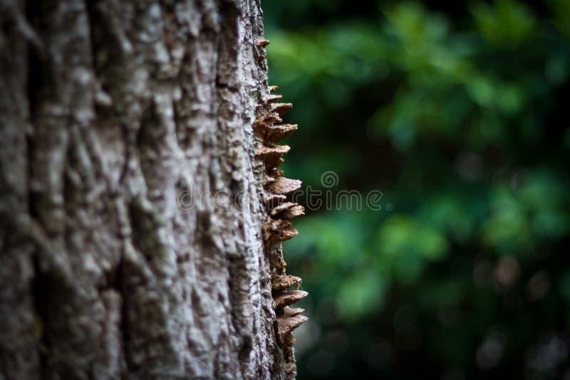 Diseño de la naturaleza en el tronco de árbol 2 imagenes de archivo