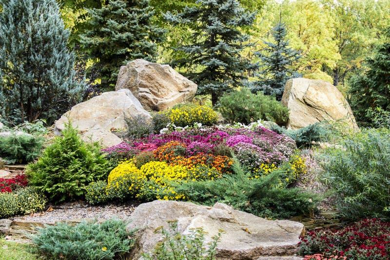 Diseño de Lanscape jardín hermoso de la picea azul, amarillo brillante fotos de archivo