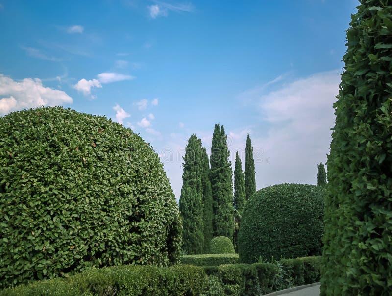Diseño del paisaje El fondo verde de la naturaleza y el jardín hermoso se adorna con árbol de hoja perenne fotografía de archivo libre de regalías