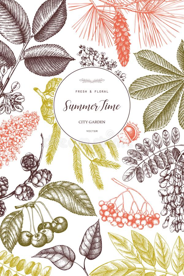 Diseño del vector con la rama exhausta de la mano, hojas, semillas, conos, bosquejo de las frutas Marco del vintage con los eleme libre illustration