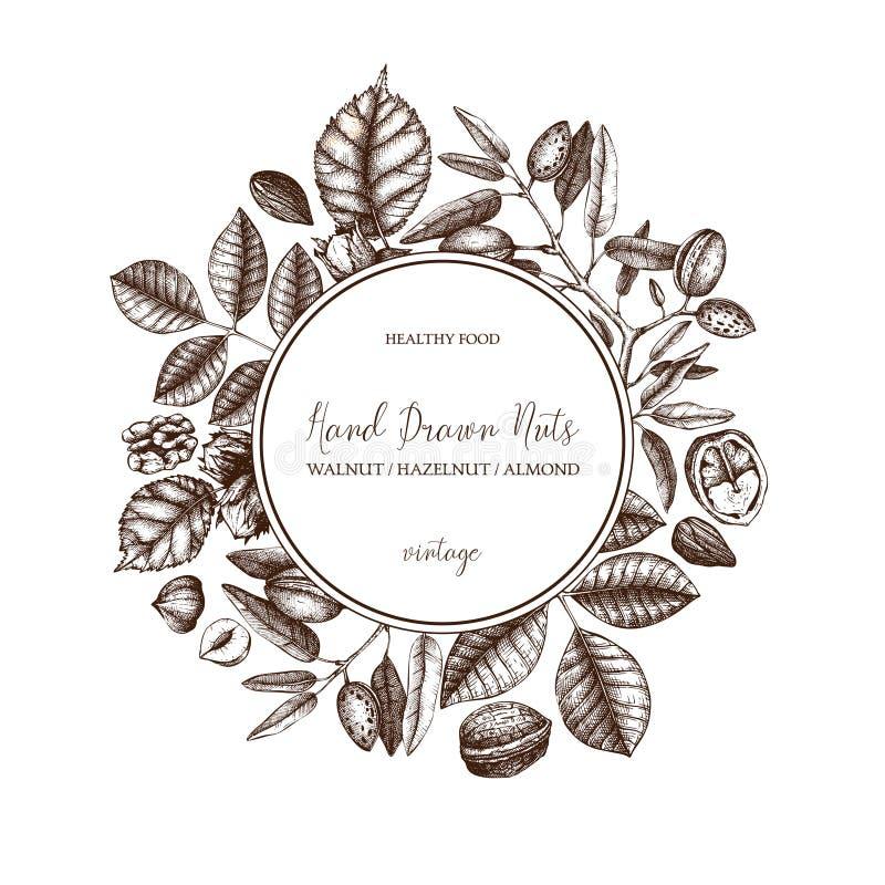 Diseño del vector con las nueces exhaustas de la mano Avellana del vintage, nuez, ejemplos de la almendra Fondo grabado del alime stock de ilustración