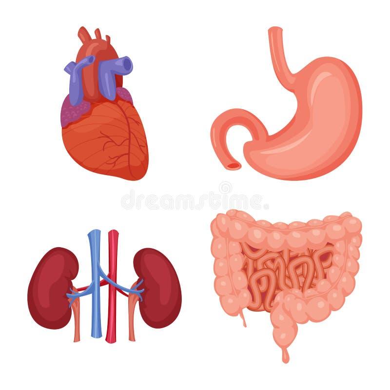 Diseño del vector de icono del cuerpo y del ser humano Colección de cuerpo y de símbolo común médico para el web ilustración del vector