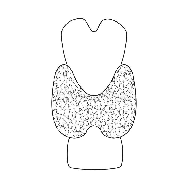 Diseño del vector de icono de la anatomía y del órgano Colección de anatomía y de símbolo común médico para la web ilustración del vector