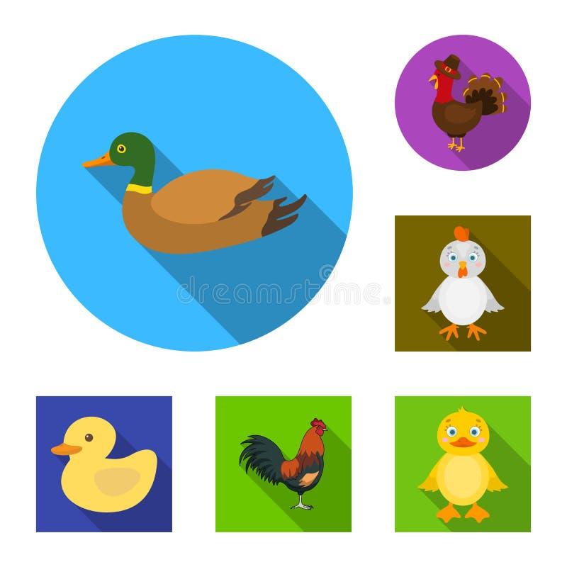 Diseño del vector de logotipo divertido y de las aves de corral Colección de icono divertido y agrícola del vector para la acción ilustración del vector