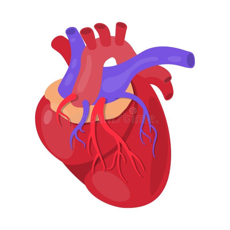 Diseño del vector de muestra de la anatomía y del órgano Fije de la anatomía y del símbolo común médico para la web stock de ilustración