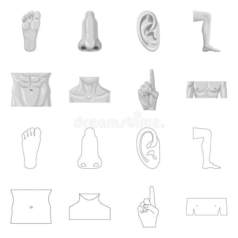 Diseño del vector de muestra del ser humano y de la parte Colección de ejemplo común del vector del ser humano y de la mujer ilustración del vector