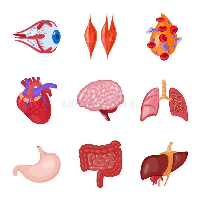 Diseño del vector de símbolo de la anatomía y del órgano Colección de anatomía y de símbolo común médico para la web ilustración del vector
