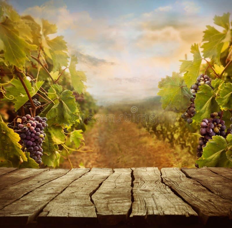 Diseño del viñedo fotos de archivo